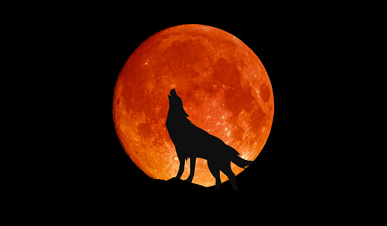 Wolf howling at the big full blood moon 1182620784