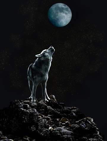 Wolf howls at the moon on a dark night 823314476