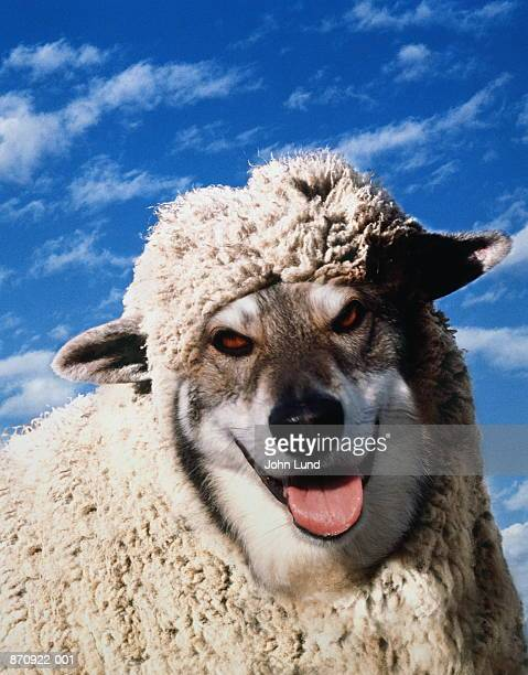 Wolf in sheep's clothing (Digital Composite)