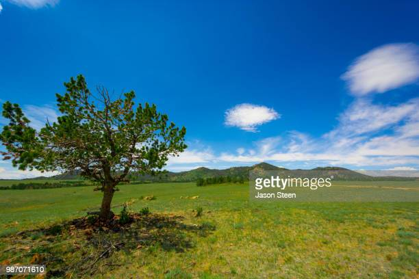 pretty wolf stock photos and pictures getty images
