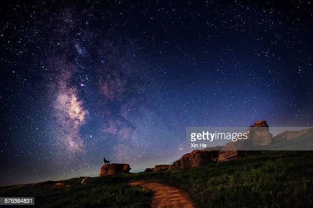 wolf under the galaxy - one animal stock pictures, royalty-free photos & images