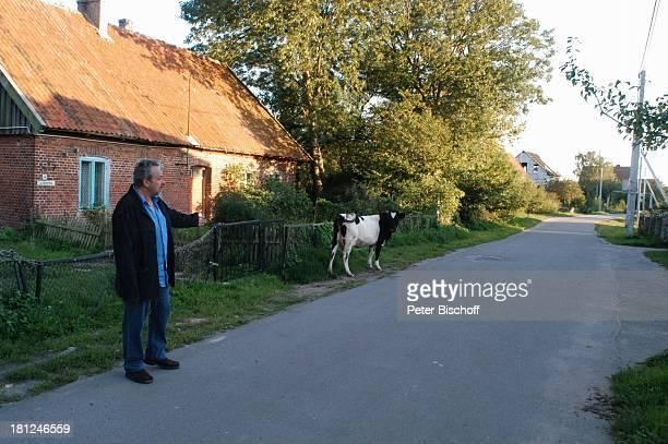 Wolfgang Stumph Kuh neben den Dreharbeiten zum ZDFFilm 'Eine Liebe in Königsberg' Rybatschi früher Rossitten/ 'Kurischen Nehrung'/ Russland