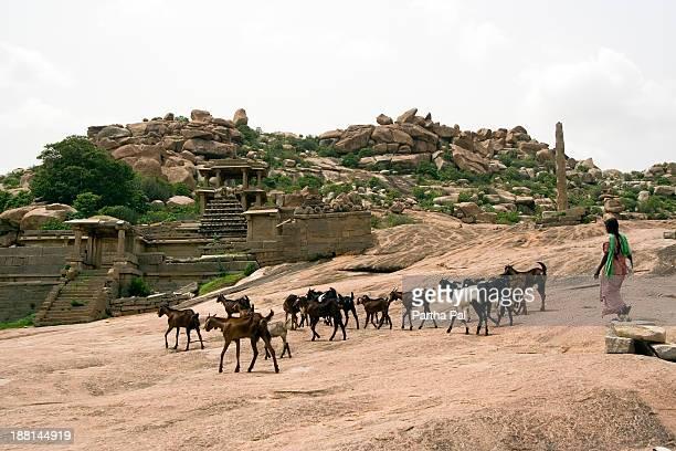Woma n with domestic animal,among Humpi Ruins
