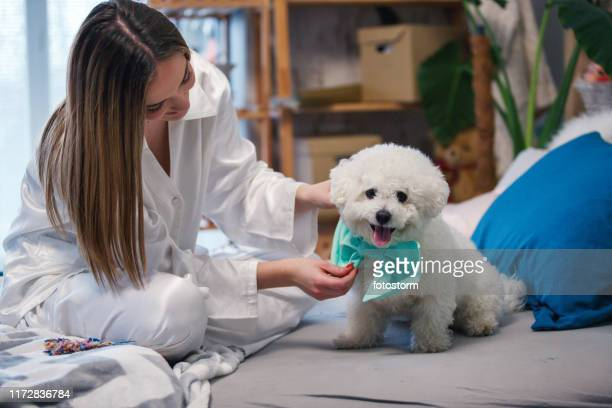woman adding a bow on her cute puppy - dog knotted in woman stock pictures, royalty-free photos & images