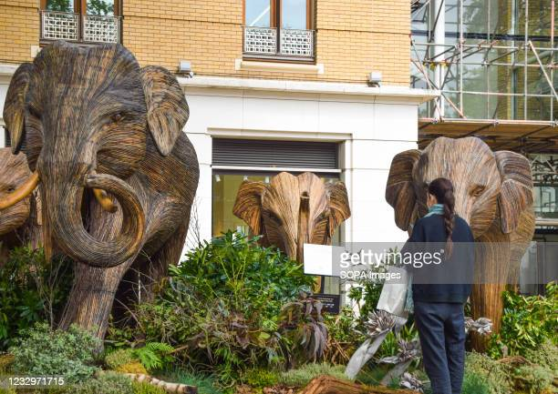 Woman admires the elephant sculptures at the Duke of York Square in Chelsea, London. Part of the CoExistence art installation, which aims to shed...
