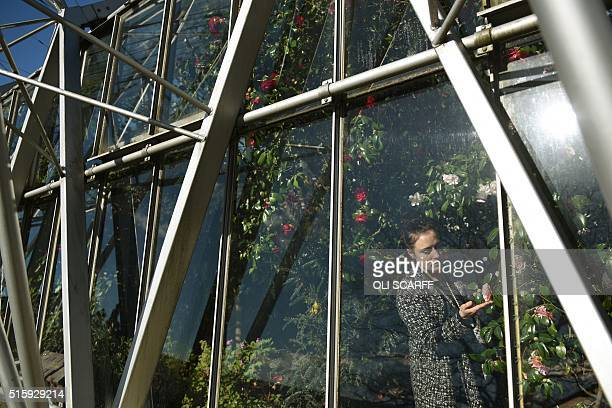 A woman admires the flora in the 'Display House' glasshouse in the grounds of Chatsworth House near Bakewell northern England on March 16 2016...