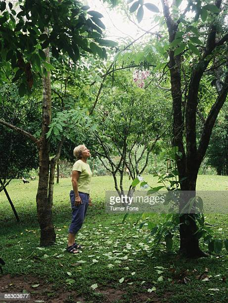 Woman admiring orchid growing in tree , Chiang Rai , Thailand