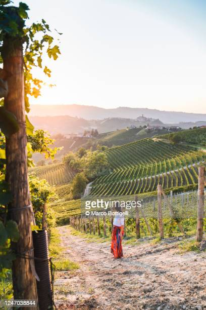 woman admiring the sunset in a vineyard, piedmont, italy - winery stock pictures, royalty-free photos & images