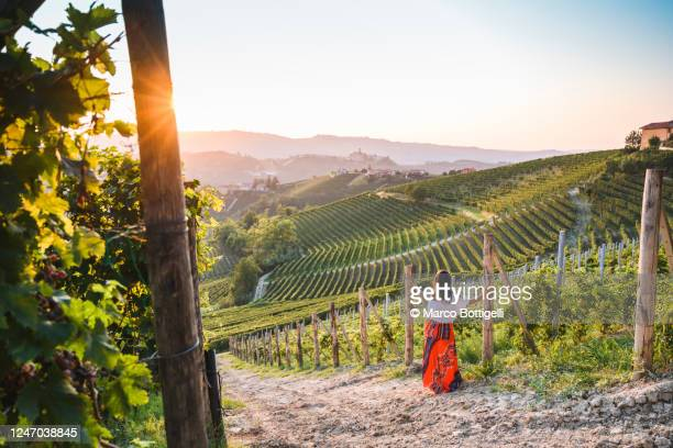 woman admiring the sunset in a vineyard, piedmont, italy - travel foto e immagini stock