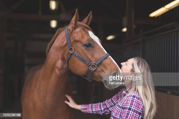 mujer acariciando cariñosamente su caballo en el granero - 1 woman 1 horse fotografías e imágenes de stock