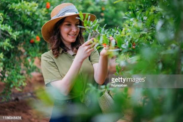 woman agricultural engineer - agronomist stock pictures, royalty-free photos & images