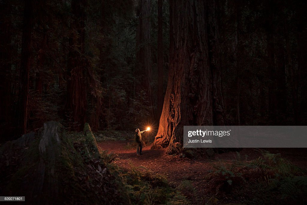 Woman alone in ancient sequoia forest, illuminated : Stock Photo