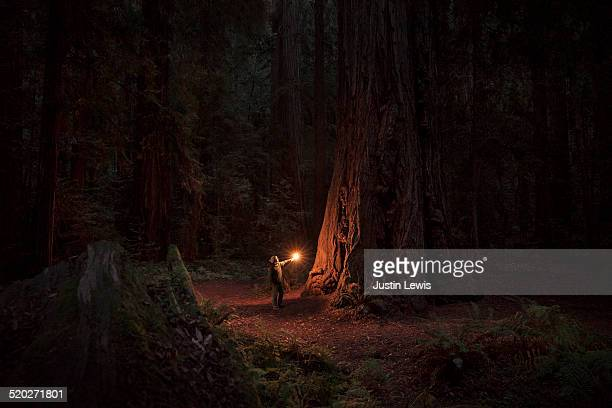 Woman alone in ancient sequoia forest, illuminated