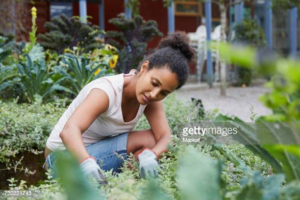 woman analyzing plants at yard - green thumb stock pictures, royalty-free photos & images
