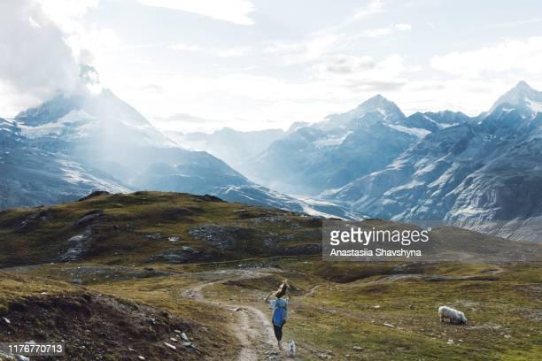 frau und hund genießen einen strahlenden sommertag in den schweizer alpen - der weg nach vorne stock-fotos und bilder