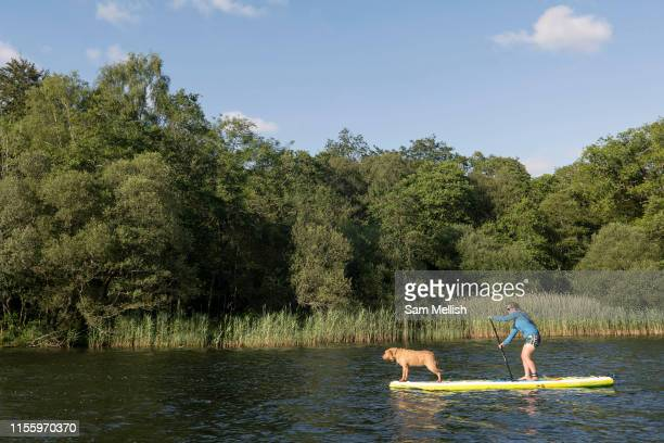 A woman and a dog on a stand up paddleboard on Lake Grasmere on the 13th June 2019 in the Lake District in the United Kingdom Lake Grasmere is also...