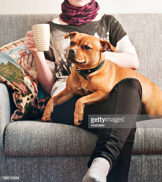 woman and a dog - staffordshire bull terrier stock pictures, royalty-free photos & images