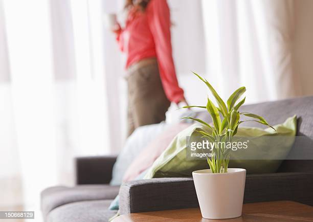 Woman and a foliage plant in a living room