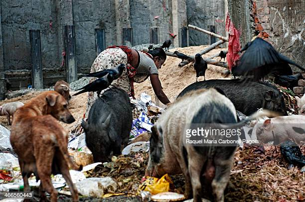 Woman and animals picking through garbage in the streets