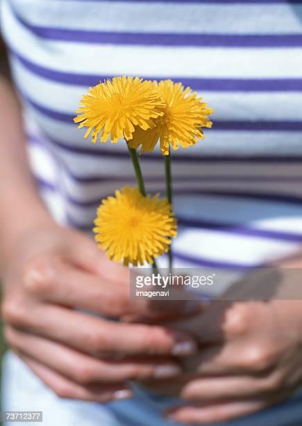 woman and dandelions - feuille de pissenlit photos et images de collection