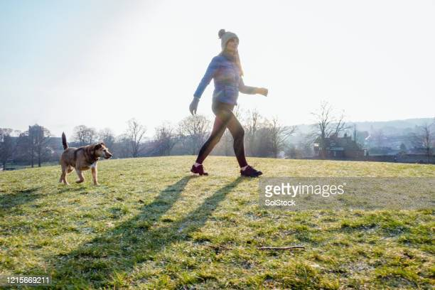 woman and dog exercising together - border terrier stock pictures, royalty-free photos & images