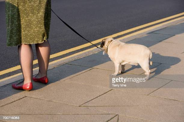 woman and dog waiting on sidewalk - london breed stock pictures, royalty-free photos & images