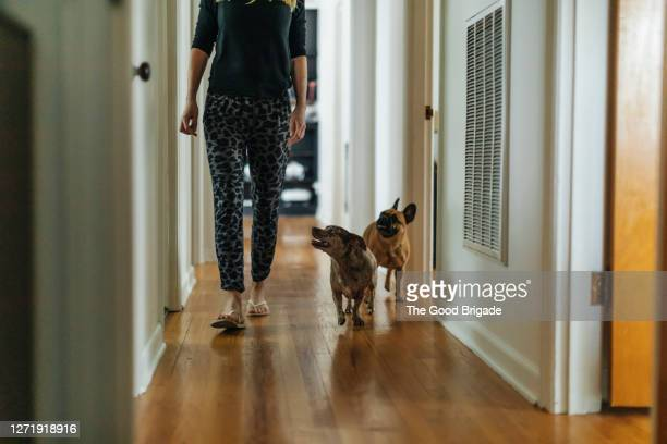 woman and dogs walking in hallway at home - following stock pictures, royalty-free photos & images
