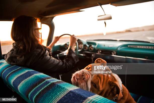 Woman and English bulldog inside Chevrolet bel air, Santa Cruz, California, USA