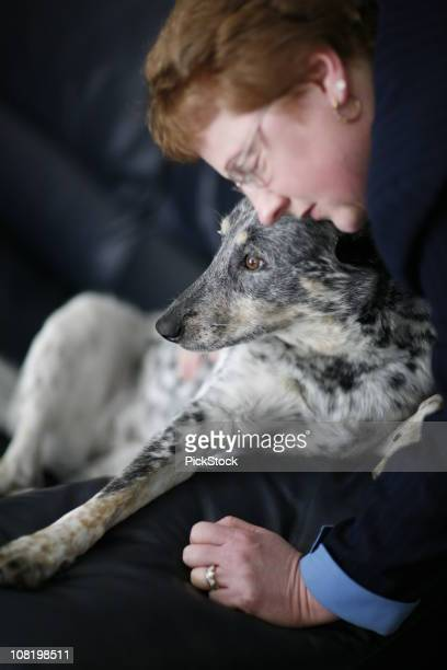 woman and her dog - australian cattle dog stock photos and pictures
