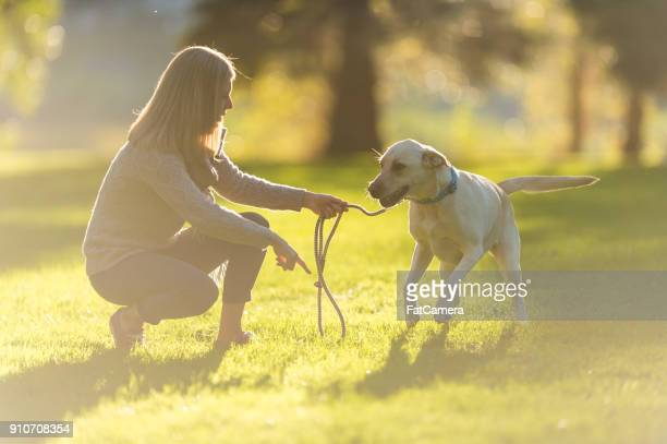 a woman and her dog - dog walker stock photos and pictures