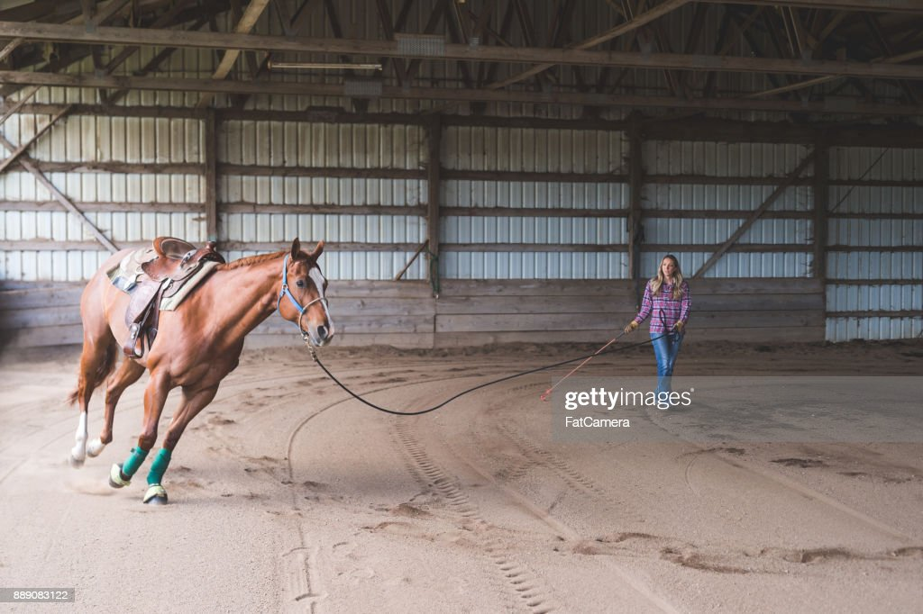 Owner is training her horse. She is holding onto the reins and standing close by while her horse walks around the stable