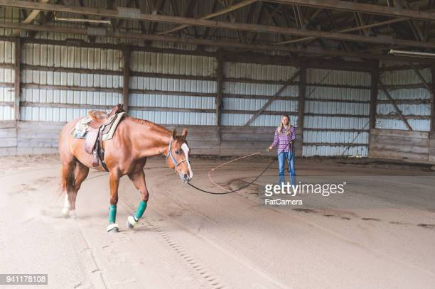 a woman and her horse - equestrian eventing stock pictures, royalty-free photos & images