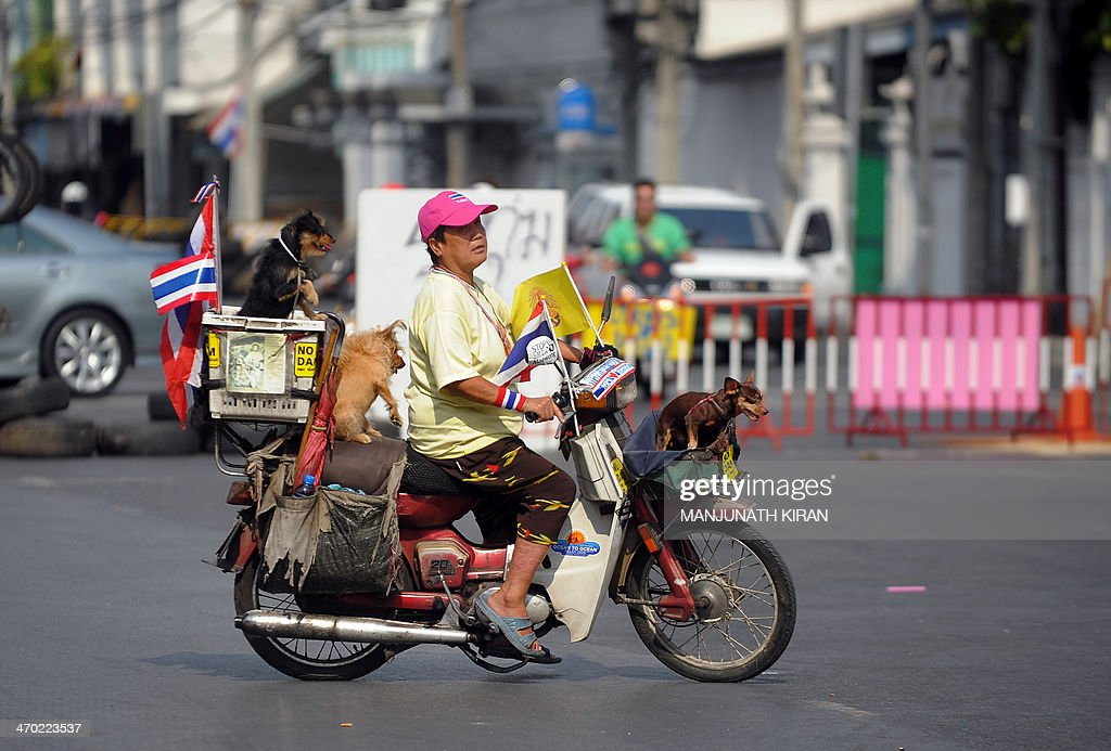 A woman and her pets on a motorcycle turn back after waiting for a traffic block to clear near Ratchadamnoen Junction in Bangkok on February 19, 2014 as a convoy of trucks carrying anti government protesters set off for a defence ministry complex in a Bangkok suburb where Yingluck Shinawatra has held meetings over the last few weeks to participate in a rally led by the People's Democratic Reform Committee (PDRC) leader Suthep Thaugsuban. Defiant Thai opposition protesters threatened to storm Prime Minister Yingluck Shinawatra's crisis headquarters on February 19, stepping up their campaign a day after dramatic street clashes left five dead and dozens wounded. AFP PHOTO/Manjunath KIRAN