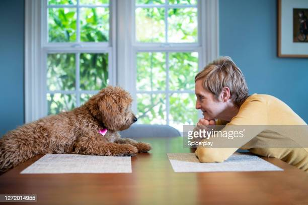 woman and her puppy at the table - naughty america stock pictures, royalty-free photos & images
