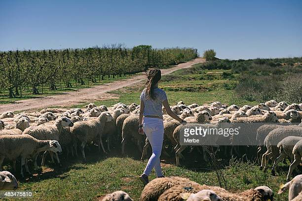 Donna e pecore aperto