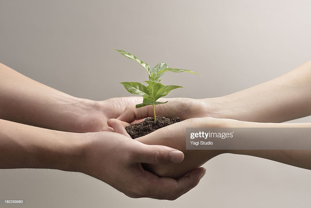 Woman and man hands holds small green plant seedli : ストックフォト