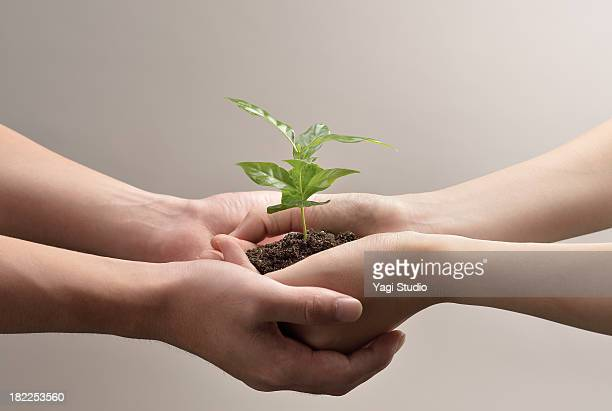 Woman and man hands holds small green plant seedli