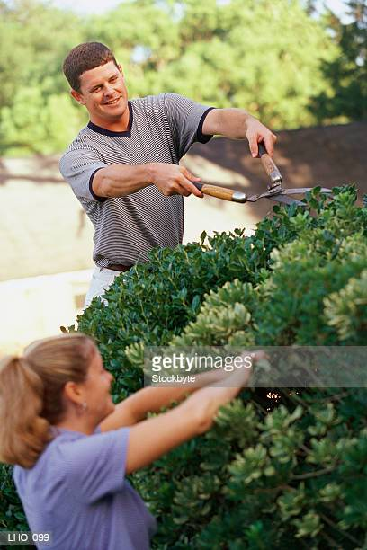 Woman and man trimming hedge