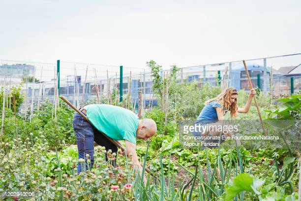woman and man working in community garden - compassionate eye foundation stock pictures, royalty-free photos & images