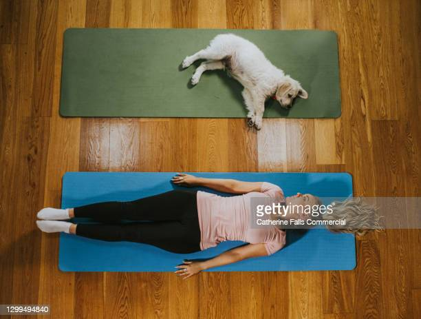 woman and puppy lie next to each other on yoga mats - place of work stock pictures, royalty-free photos & images