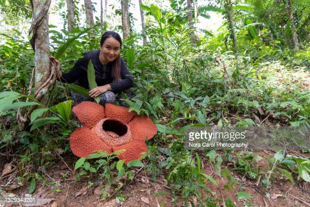 woman and rafflesia flower - biggest stock pictures, royalty-free photos & images