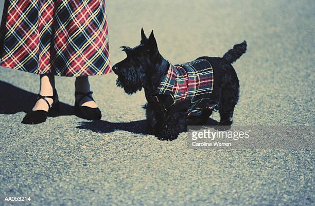 Woman and Scottish terrier wearing plaid, low section
