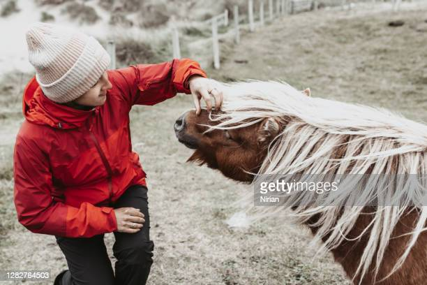 woman and shetland pony - tourist stock pictures, royalty-free photos & images