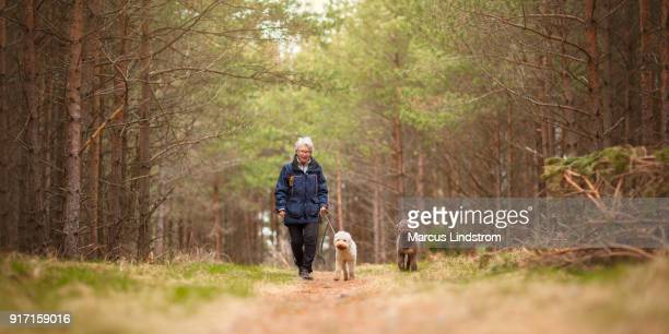 a woman and two dogs - walking stock pictures, royalty-free photos & images