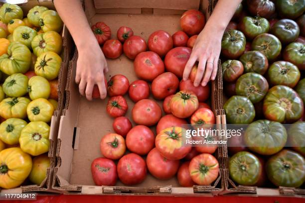 A woman arranges her display of heirloom tomatoes at a Saturday vegetable market in downtown Denver Colorado