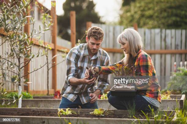 Woman assisting man while planting in raised bed at backyard