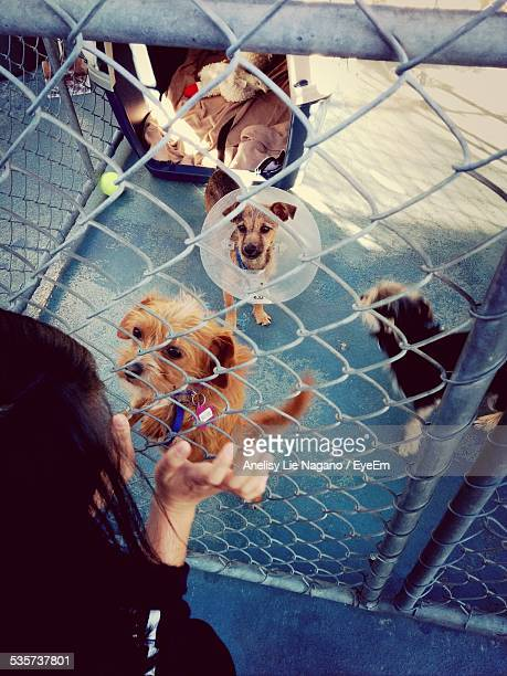 Woman At Animal Shelter