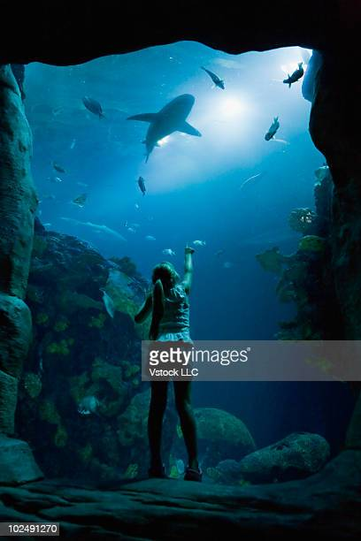 woman at aquarium - chattanooga stock pictures, royalty-free photos & images