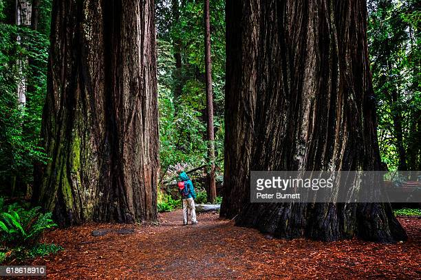 Woman at SG in Jedediah Smith Redwoods State Park, CA
