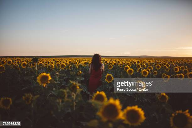 Woman At Sunflower Field Against Clear Sky